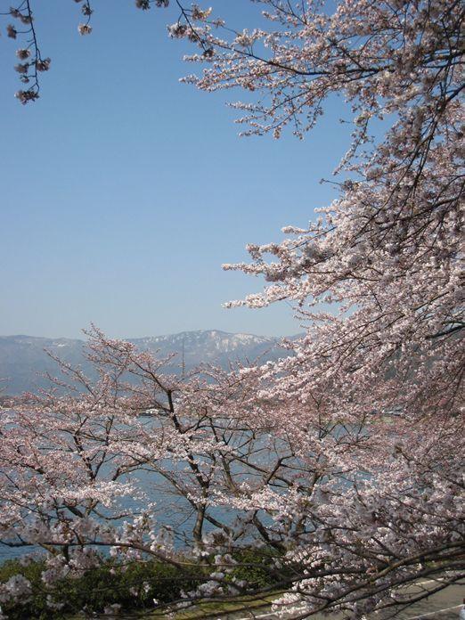 180309sakura.jpg