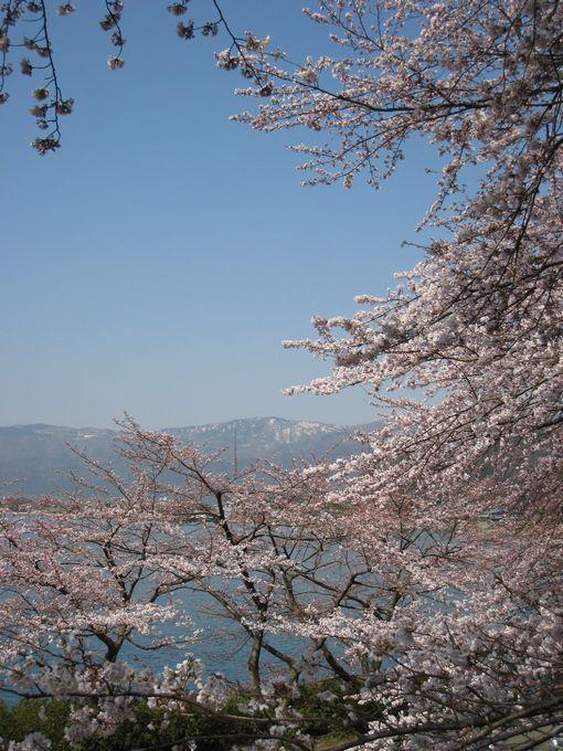 130405sakura.jpg